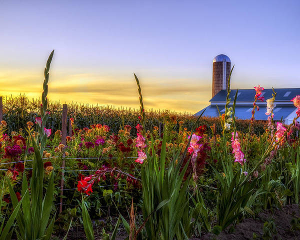 Mark Papke Poster featuring the photograph Flower Farm by Mark Papke