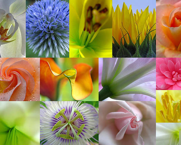 Artwork Poster featuring the photograph Flower Macro Photography by Juergen Roth