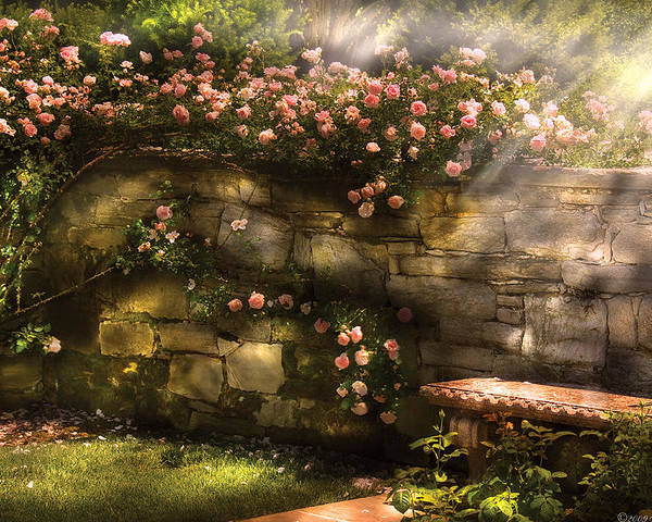 Savad Poster featuring the photograph Flower - Rose - In The Rose Garden by Mike Savad