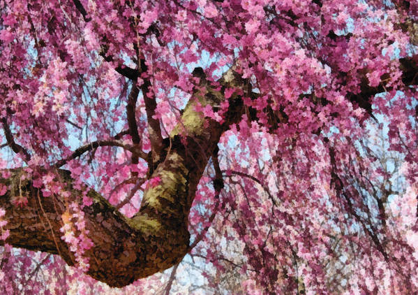 Spring Poster featuring the digital art Flower - Sakura - Finally It's Spring by Mike Savad