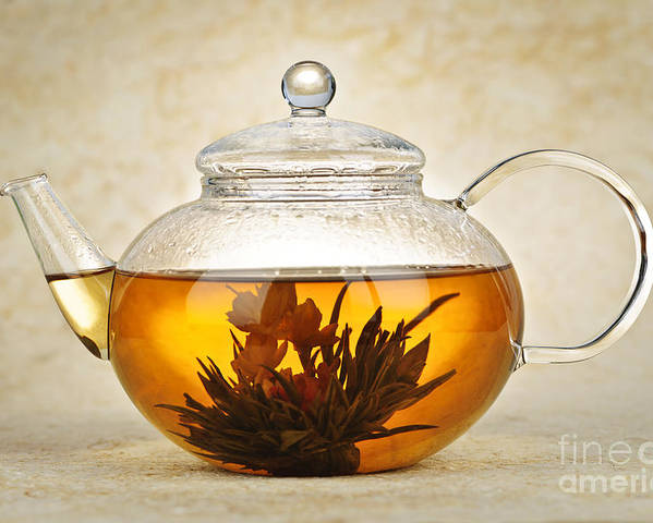 Flowering Poster featuring the photograph Flowering Blooming Tea by Elena Elisseeva