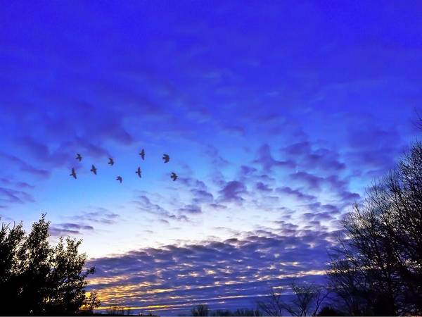 Birds Poster featuring the photograph Fly By At Sunset by Chris Montcalmo