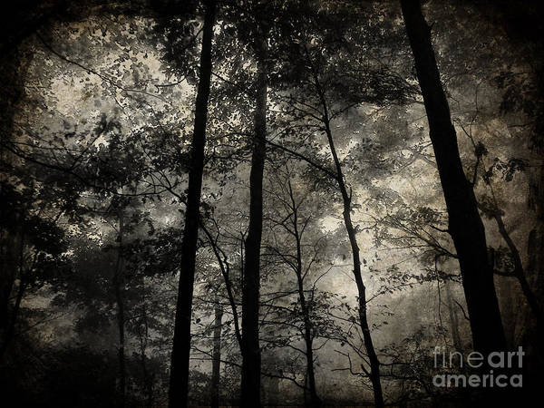 Landscape Poster featuring the photograph Fog In The Forest by Lorraine Heath