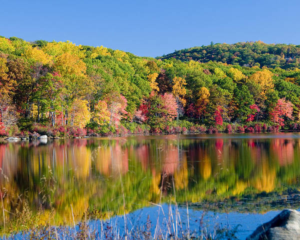 Lake Poster featuring the photograph Foilage In The Fall by Anthony Sacco
