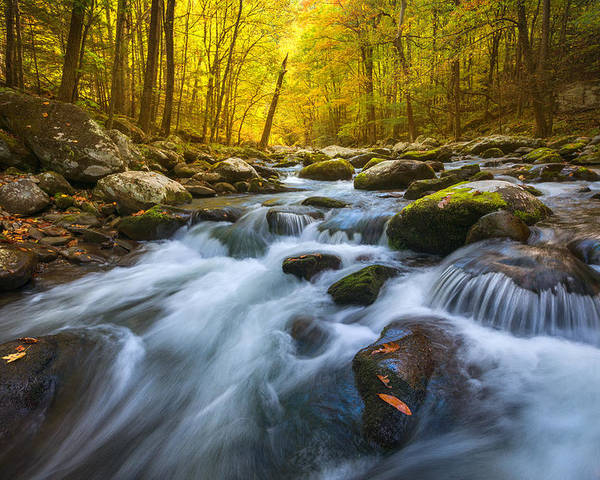 Gsmnp Poster featuring the photograph Forest Flow by Chris Moore