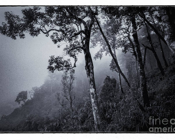 Adventure Poster featuring the photograph Forest In The Fog by Setsiri Silapasuwanchai