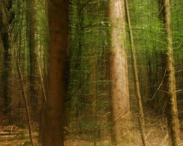 Forest Poster featuring the photograph Forest by Peter Gau