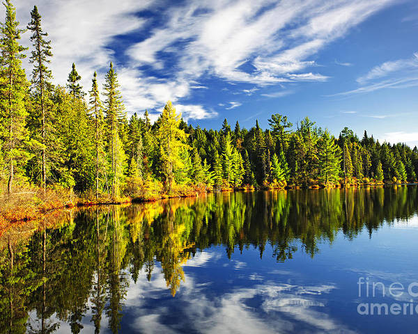 Lake Poster featuring the photograph Forest Reflecting In Lake by Elena Elisseeva