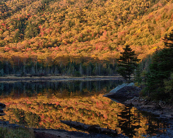 Autumn Poster featuring the photograph Forest Reflection by Jeff Folger