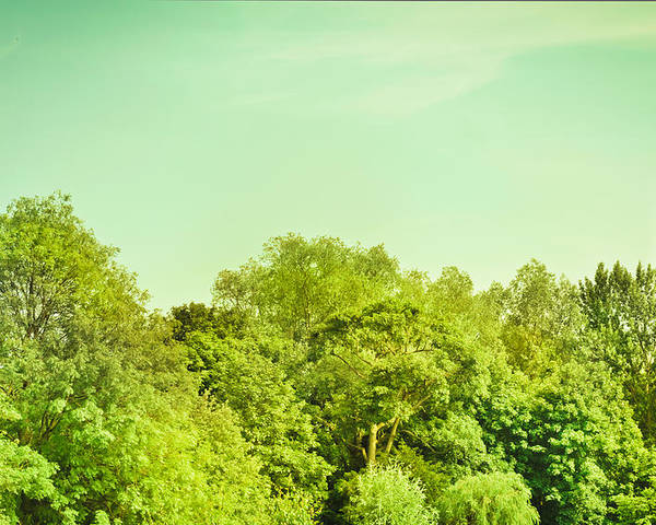 Background Poster featuring the photograph Forest by Tom Gowanlock