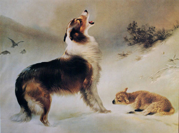 Collie Dog Poster featuring the painting Found by Albrecht Schenck