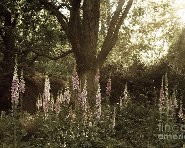 Maryland Garden Poster featuring the photograph Foxglove Garden by Chris Scroggins