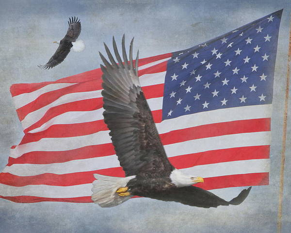 Freedom Poster featuring the photograph Freedom Flight by Angie Vogel