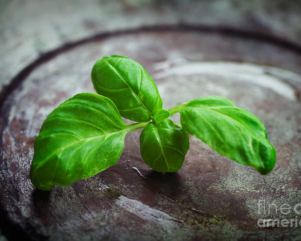 Aroma Poster featuring the photograph Fresh Basil by Mythja Photography