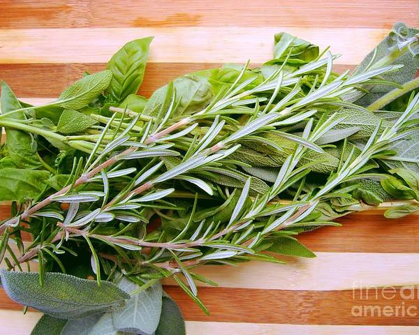 Rosemary Poster featuring the photograph Fresh Herbs by Nina Ficur Feenan