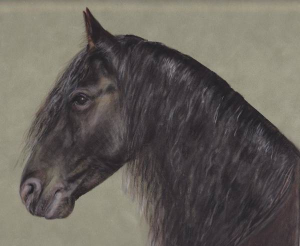 Friesian Poster featuring the pastel Friesian Wisdom by Loreen Pantaleone