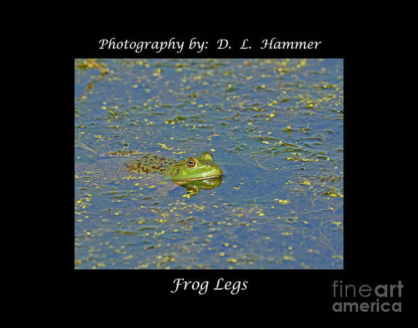 Wildlife Poster featuring the photograph Frog Legs by Dennis Hammer