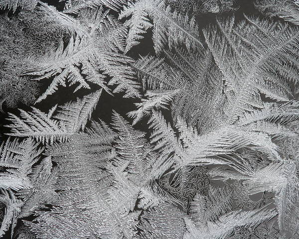 Frost Poster featuring the photograph Frost Patterns by Dr Carolyn Reinhart