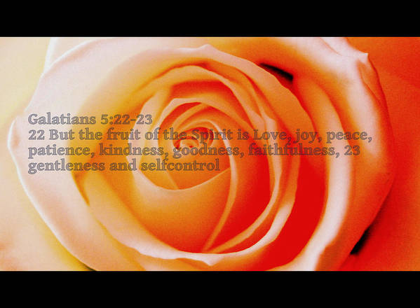 Pink Rose Poster featuring the photograph Fruit Of The Spirit by Ragnheidur