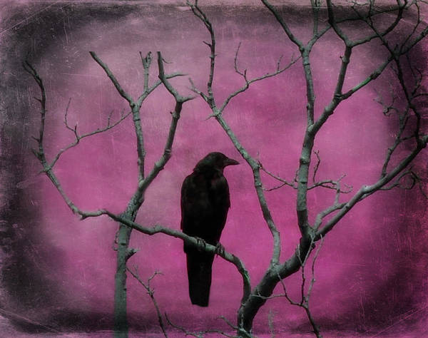 Bird Poster featuring the digital art Fuchsia by Gothicrow Images