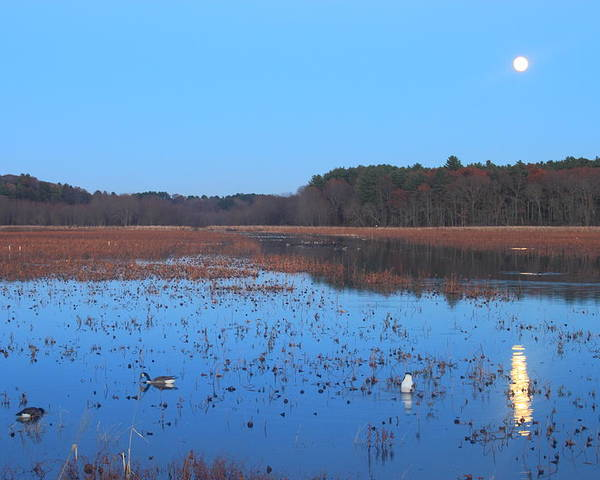 Great Meadows National Wildlife Refuge Poster featuring the photograph Full Moon At Great Meadows National Wildlife Refuge by John Burk