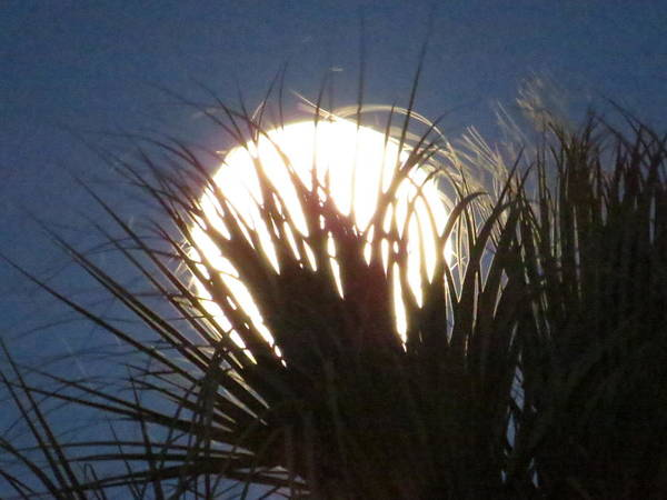 Full Moon Through The Palms Poster featuring the photograph Full Moon Through The Palms by Zina Stromberg