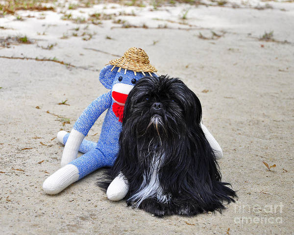 Monkey Poster featuring the photograph Funky Monkey And Sweet Shih Tzu by Al Powell Photography USA