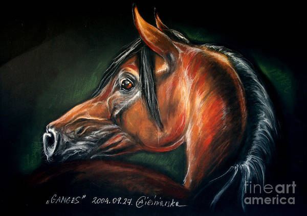 Horse Poster featuring the drawing Ganges by Angel Ciesniarska