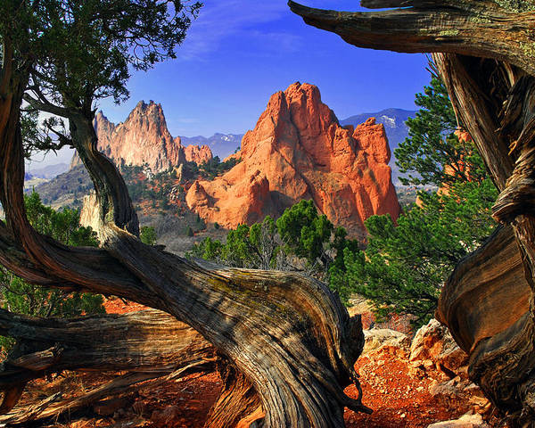 Garden Of The Gods Poster featuring the photograph Garden Framed By Twisted Juniper Trees by John Hoffman