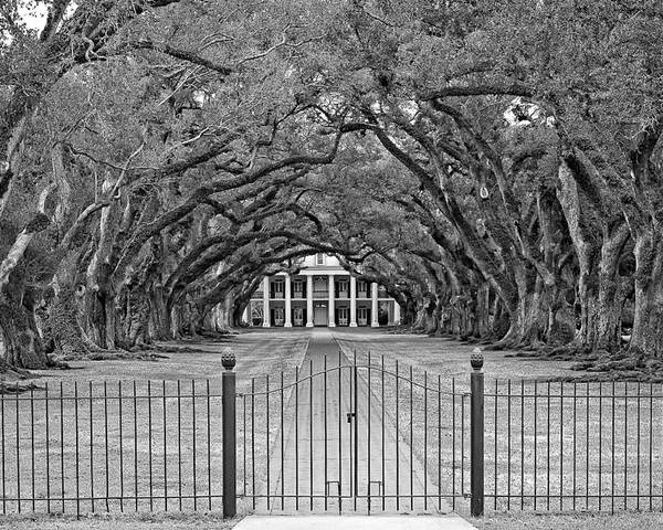Oak Alley Plantation Poster featuring the photograph Gateway To The Old South Monochrome by Steve Harrington