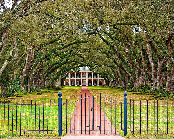 Oak Alley Plantation Poster featuring the photograph Gateway To The Old South by Steve Harrington