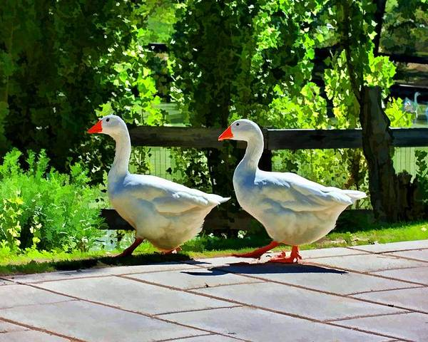 Geese Poster featuring the photograph Geese Strolling In The Garden by Tracie Kaska