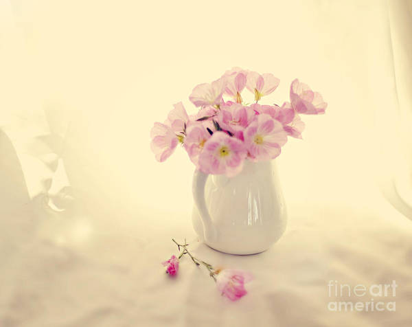 Pink Primroses Poster featuring the photograph Gentle Light by Linde Townsend