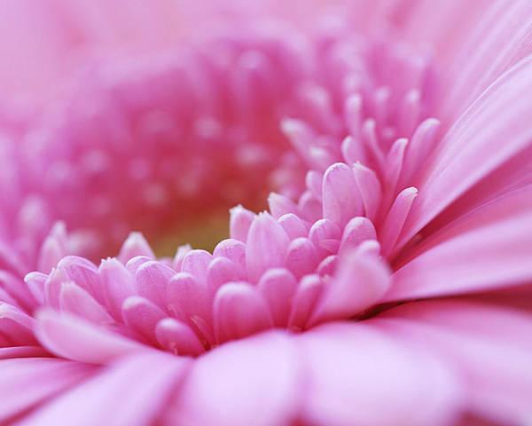 Flower Poster featuring the photograph Gerbera Daisy Flower - Pink by Natalie Kinnear