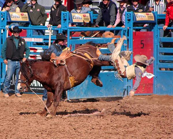 Rodeo. Rodeos Poster featuring the photograph Getting Off Is Easy by Joe Kozlowski