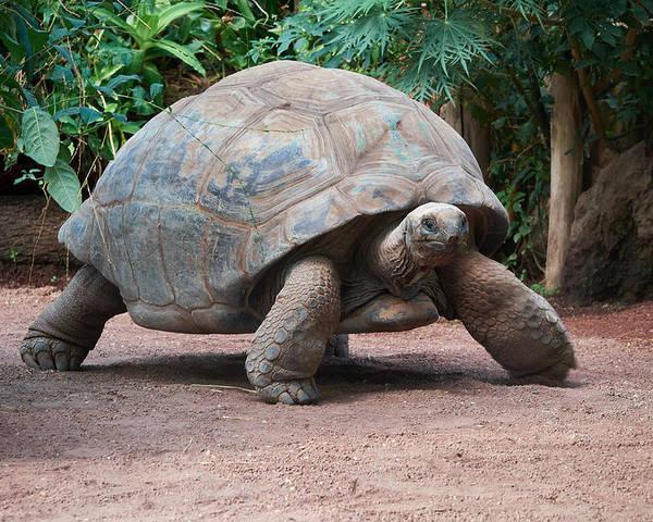 Rüyada Kocaman Dev Kaplumbağa Görmek