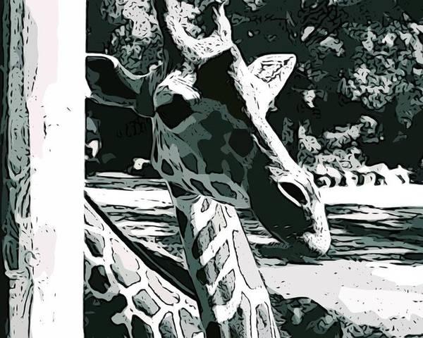 Giraffe Poster featuring the photograph Giraffe Closeup by Tamara Gantt