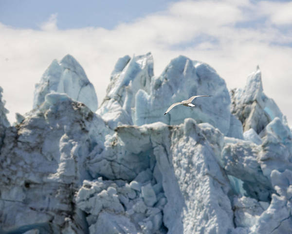 Glacier Poster featuring the photograph Glacial Flight by Vicki Jauron