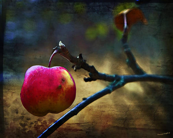 Apple Poster featuring the photograph Go On Dearie Take A Bite by Theresa Tahara
