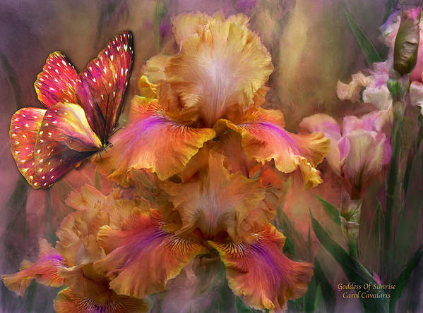Iris Poster featuring the mixed media Goddess Of Sunrise by Carol Cavalaris