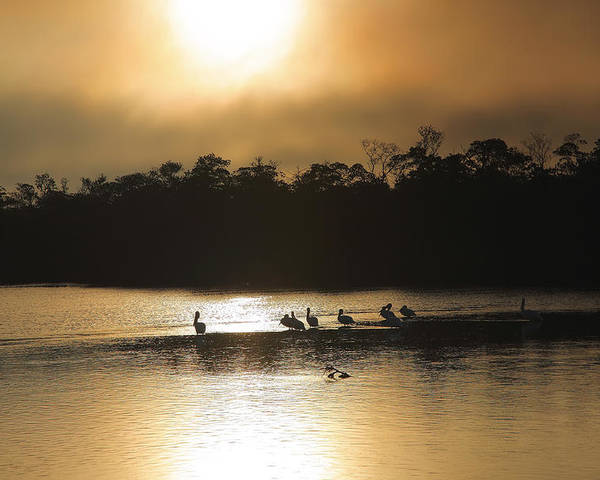 Wildlife Poster featuring the photograph Golden Morning On Ding Darling by Steven Ainsworth