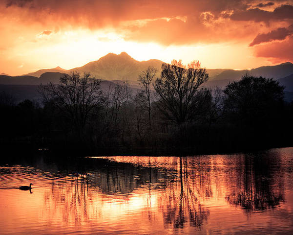 Sunsets Poster featuring the photograph Goose On Golden Ponds 1 by James BO Insogna