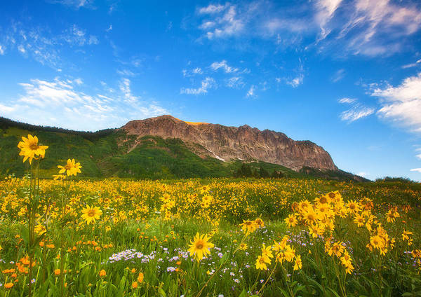 Colorado Landscapes Poster featuring the photograph Gothic Meadow by Darren White