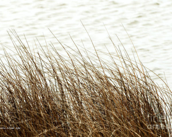 Shore Of Virginia Beach Poster featuring the photograph Grass Down By The Shore Of Virginia Beach by Artist and Photographer Laura Wrede