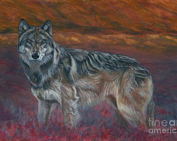 Wildlife Poster featuring the painting Gray Wolf by Tom Blodgett Jr