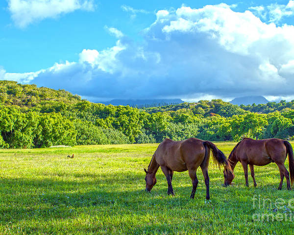 Horses Poster featuring the photograph Grazing In Paradise by Roselynne Broussard