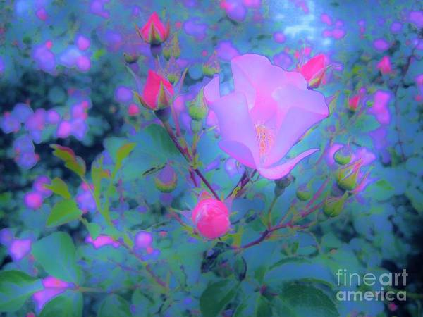 Rose Poster featuring the photograph Gypsy Rose - Flora - Garden by Susan Carella