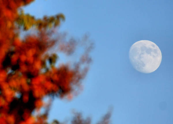 Moon Poster featuring the photograph Harvest Moon by Karen Scovill
