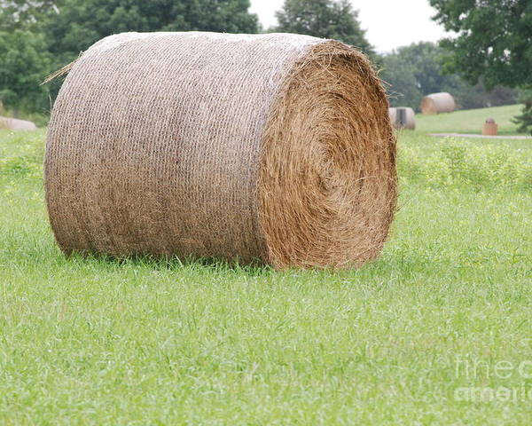 Straw Poster featuring the photograph Hay Bale by Mark McReynolds