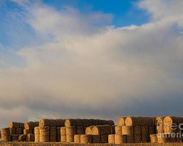 Hay Poster featuring the photograph Hay Bales by James BO Insogna